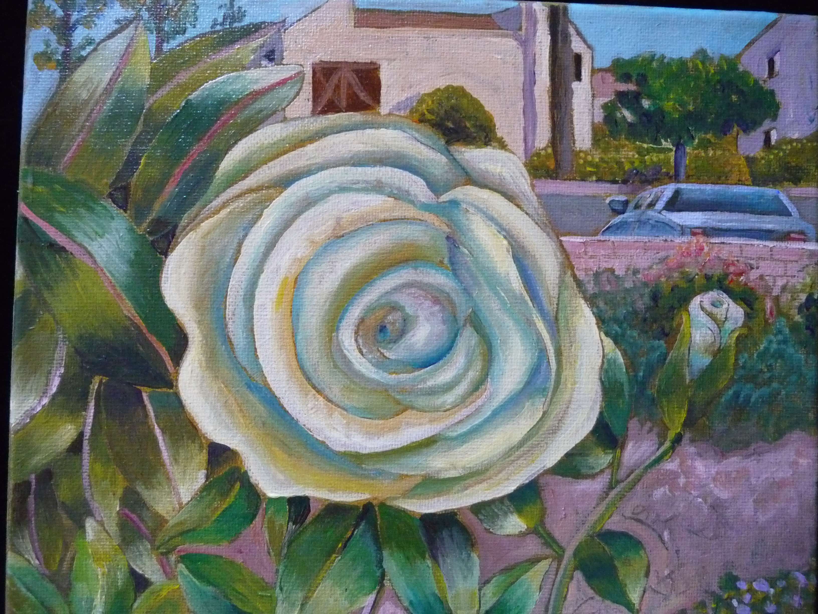 Kathy Breaux - White Rose, 2019
